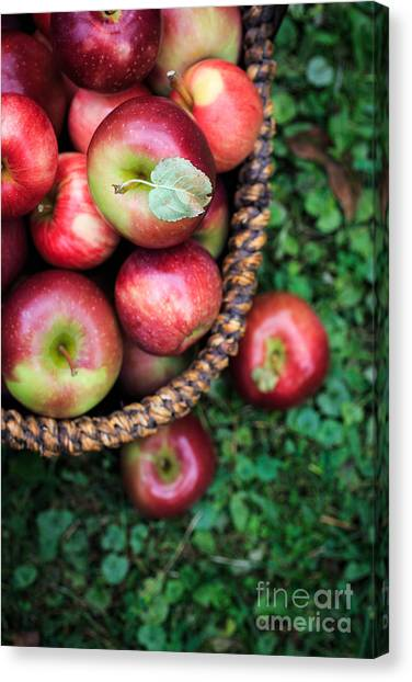 Fruit Baskets Canvas Print - Fresh Picked Apples by Edward Fielding