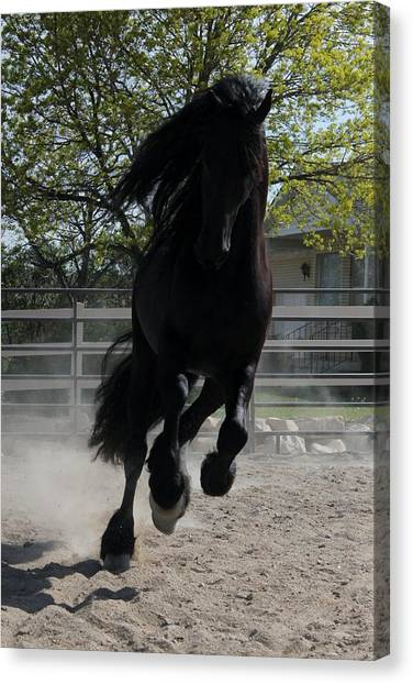 Friesian Spirit Canvas Print
