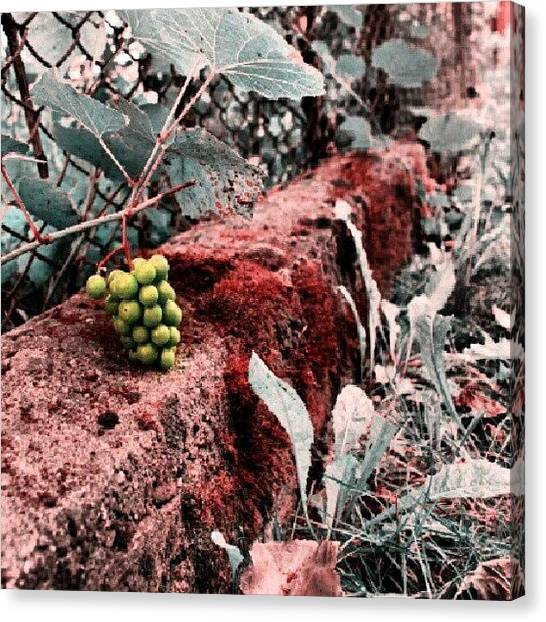 Red Wine Canvas Print - Future #wine #grapevine #grapes #plant by Vaivoda Vlad