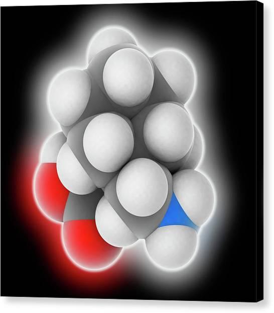 Gabapentin Drug Molecule Canvas Print by Laguna Design