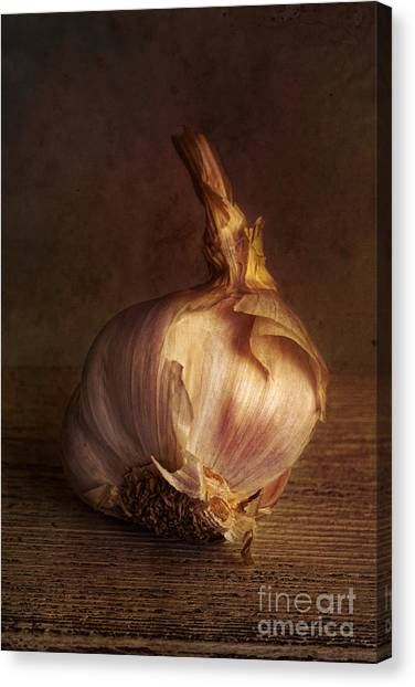 Condiments Canvas Print - Garlic 2 by Elena Nosyreva