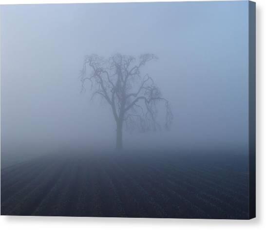 Garry Oak In Fog  Canvas Print