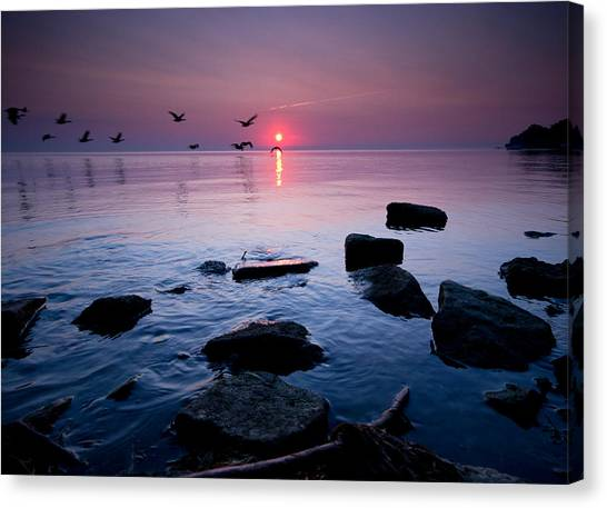 St Clair Canvas Print - Geese At Sunrise by Cale Best