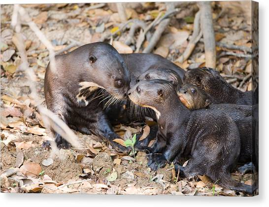Fallen Leaf Canvas Print - Giant Otter Pteronura Brasiliensis by Panoramic Images