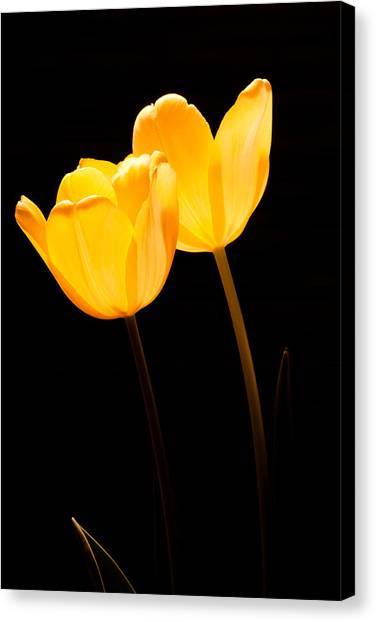Glowing Tulips II Canvas Print