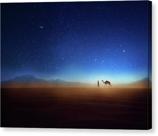 Camels Canvas Print - Go Home by Djeff Act