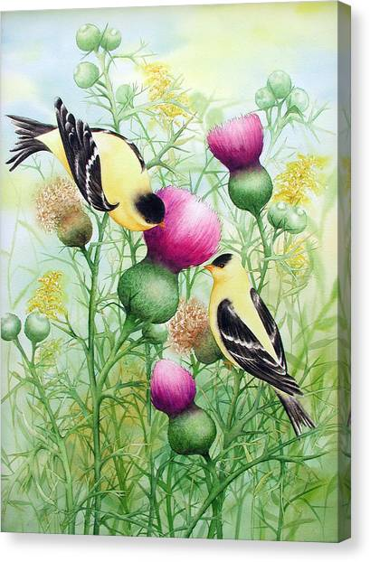 Gold Finches On Thistles Canvas Print
