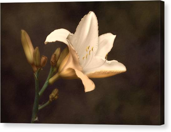 Bloom Canvas Print - Golden Daylily by Tom Mc Nemar