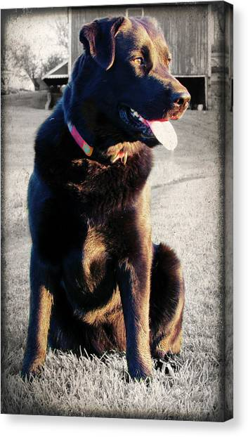 Golden Girl Canvas Print by Andrea Dale
