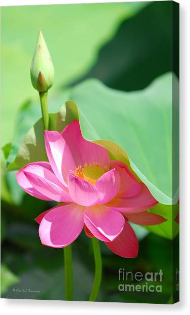 D48l-96 Water Lily At Goodale Park Photo Canvas Print