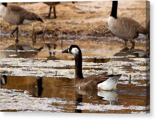 Goose Pond Canvas Print