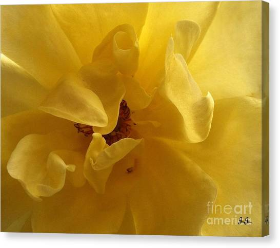 Gracefully Yellow Canvas Print by Geri Glavis