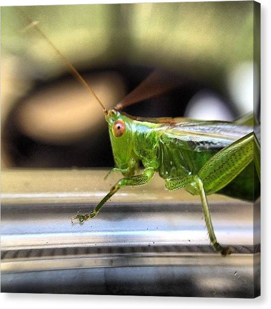 Grasshoppers Canvas Print - #grasshopper #macro #olloclip by Charles H
