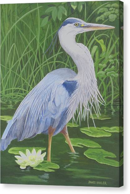 Great Blue Heron Canvas Print by James Lawler