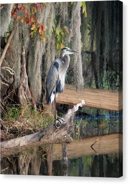 Great Blue Heron Canvas Print by Jeff Wright