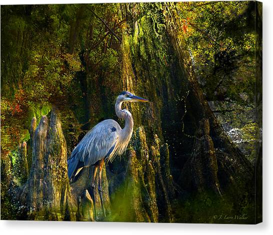 Great Cypress Canvas Print - Great Blue Heron Slowly Strolling by J Larry Walker