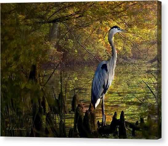 Great Cypress Canvas Print - Great Blue Heron Wading by J Larry Walker
