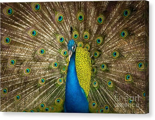 Green Beautiful Peacock Canvas Print
