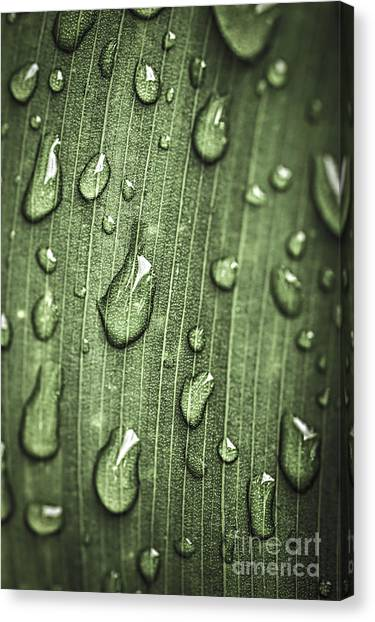 Plants Canvas Print - Green Leaf Abstract With Raindrops by Elena Elisseeva