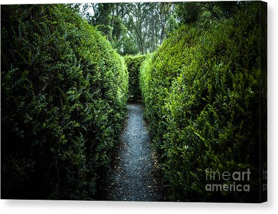 Maze Puzzle Canvas Print - Green Nature Photo Inside Hedge Maze by Jorgo Photography - Wall Art Gallery