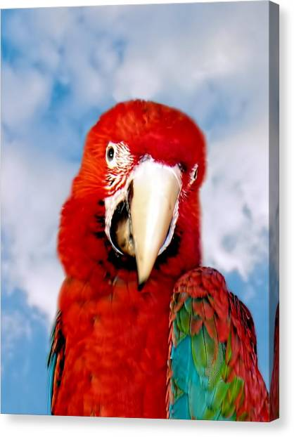 Canvas Print featuring the photograph Green Winged Red Macaw by David Rich
