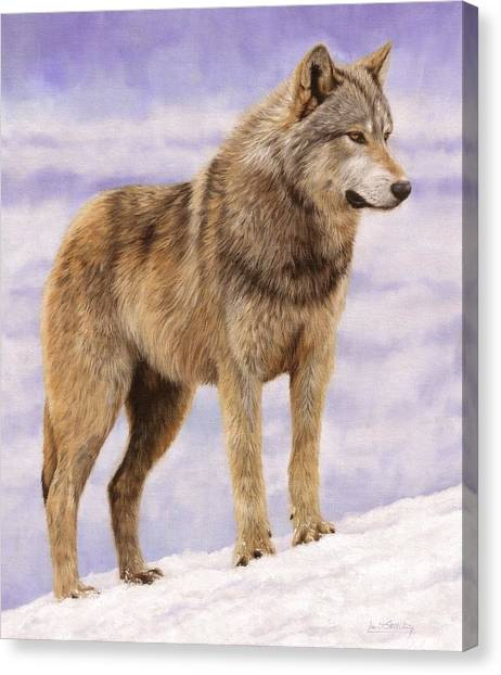 Wolves Canvas Print - Grey Wolf by David Stribbling
