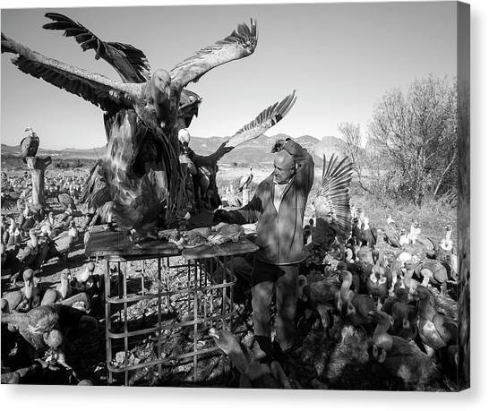 Vultures Canvas Print - Griffon Vulture Conservation by Nicolas Reusens