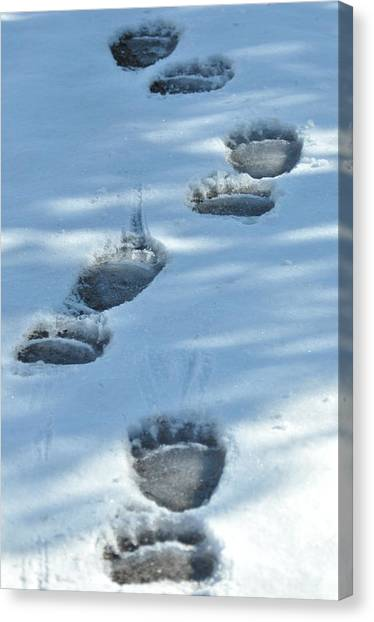 Grizzly Bear Tracks Canvas Print