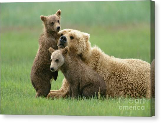 Grizzly Cubs Play With Mom Canvas Print