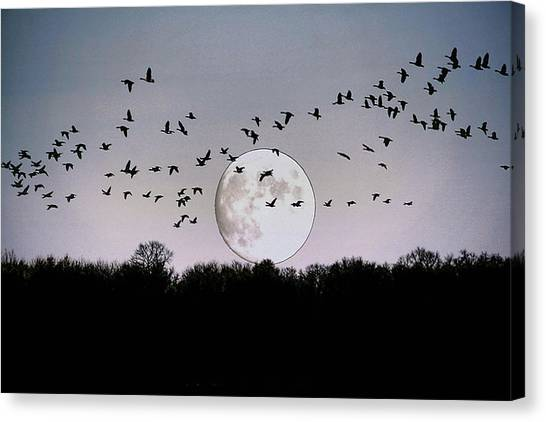 Guided By The Moon Canvas Print