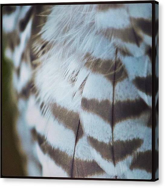 Falcons Canvas Print - Gyr Falcon by Susan Scherr