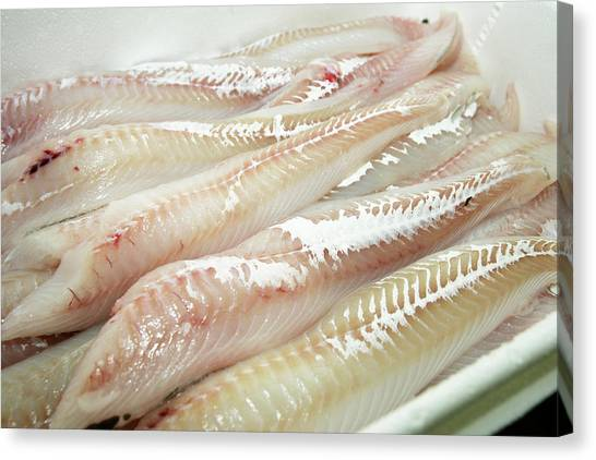 Fillet Canvas Print - Haddock Fillets by Gustoimages/science Photo Library