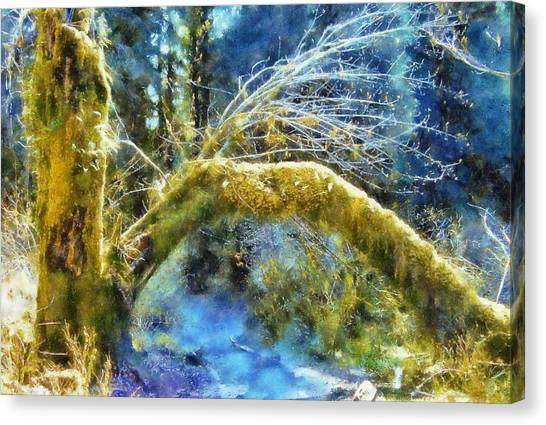 Mossy Forest Canvas Print - Hall Of Mosses  by Kaylee Mason