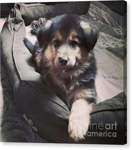 Puppies Canvas Print - Hannah #instadog #ilovemydog #puppy by Abbie Shores