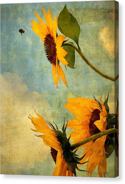 Happy Landing Canvas Print by William Schmid