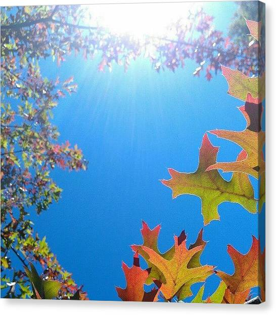 Orange Canvas Print - Hello Autumn by CML Brown