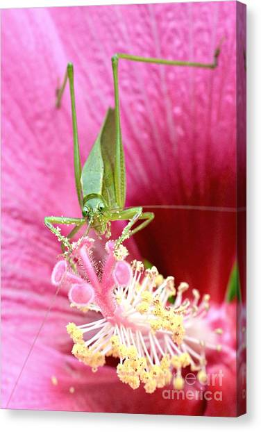 Hibiscus And Friend Canvas Print