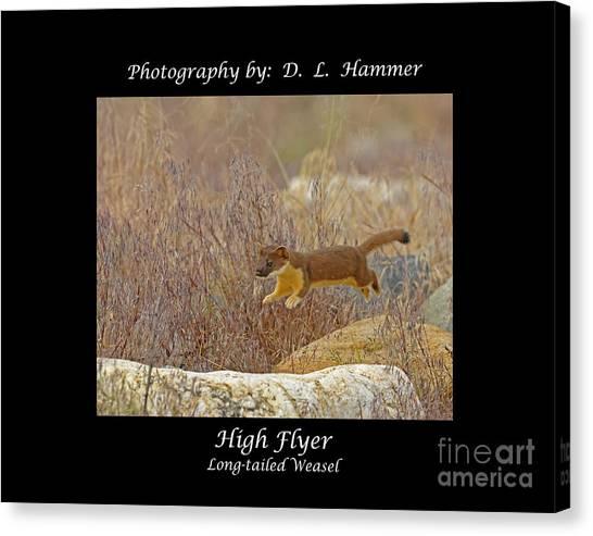 High Flyer Canvas Print by Dennis Hammer