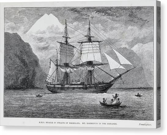 Beagles Canvas Print - Hms Beagle by Natural History Museum, London/science Photo Library