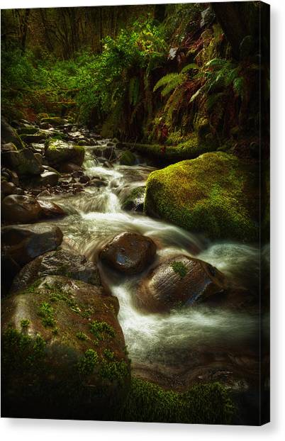 Hoh Stream Canvas Print