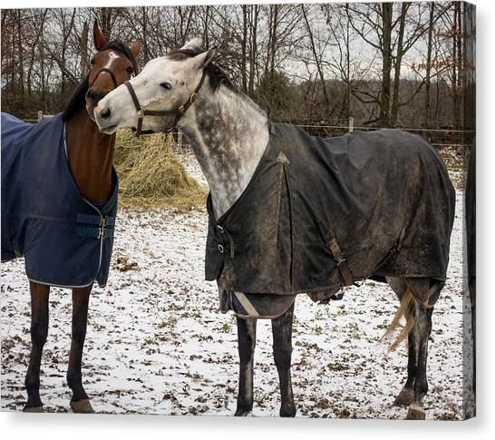 Horse Whispers Canvas Print
