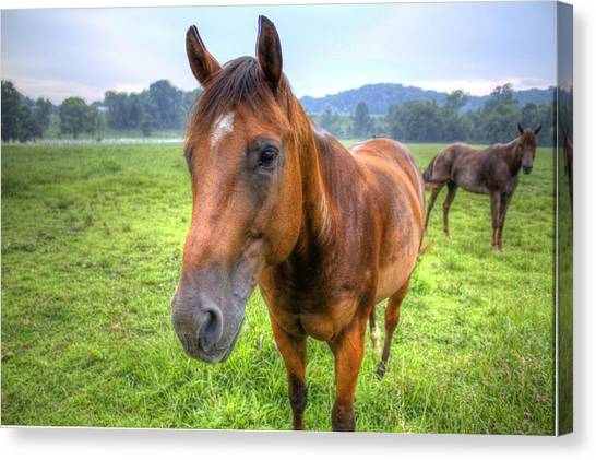 Horses In A Field Canvas Print