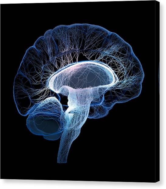 Brain Canvas Print - Human Brain Complexity by Johan Swanepoel