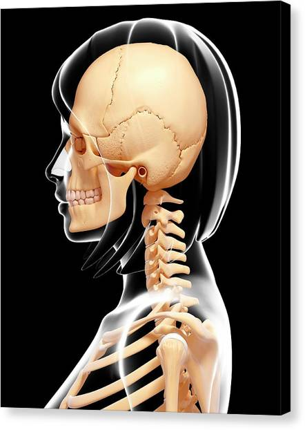 Head And Neck Anatomy Canvas Prints Page 2 Of 6 Fine Art America
