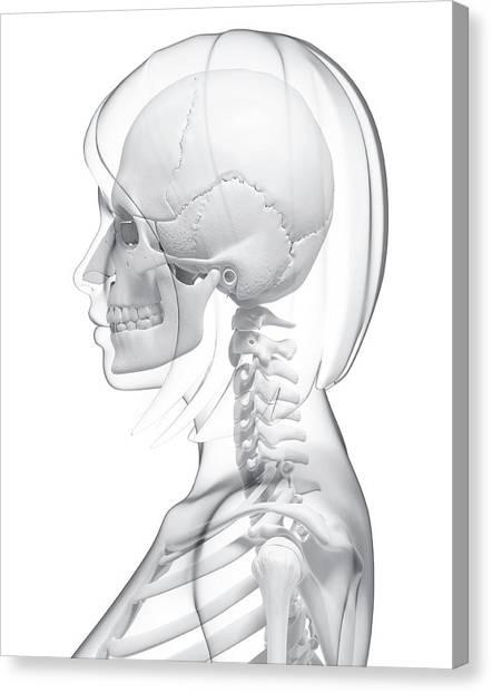 Head And Neck Anatomy Canvas Prints Fine Art America