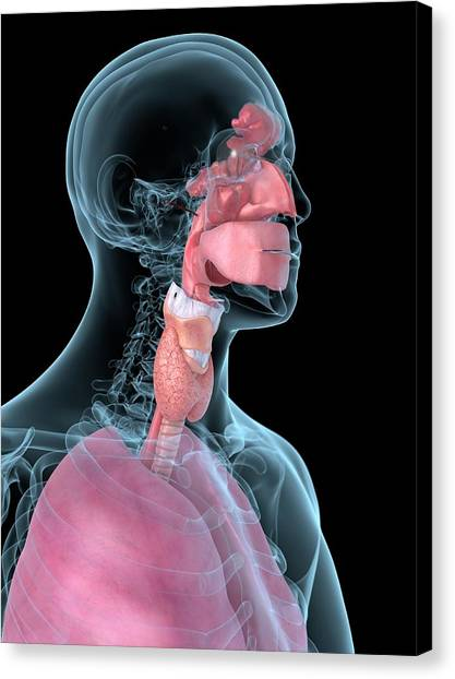 Human Throat Canvas Print by Sciepro