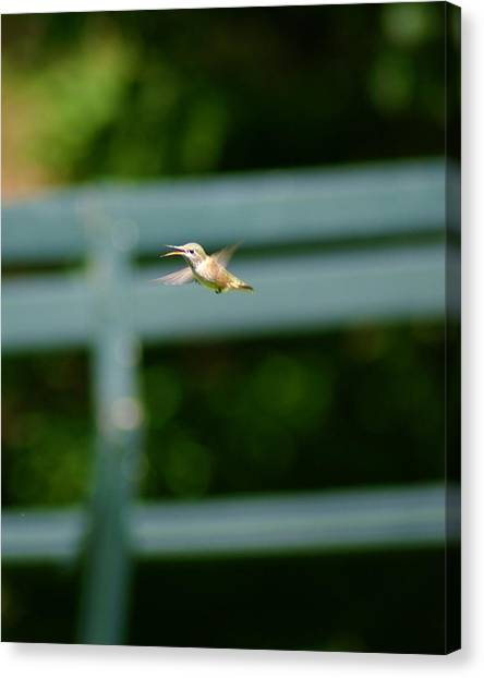 Canvas Print featuring the photograph Hummer In Flight by Ben Upham III