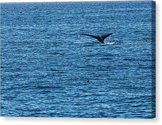 Canvas Print featuring the photograph Humpback Whale Lobtailing by Perla Copernik