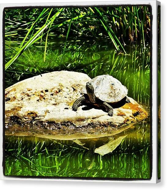 Tortoises Canvas Print - I Like The Sun by Gianluca Deplano