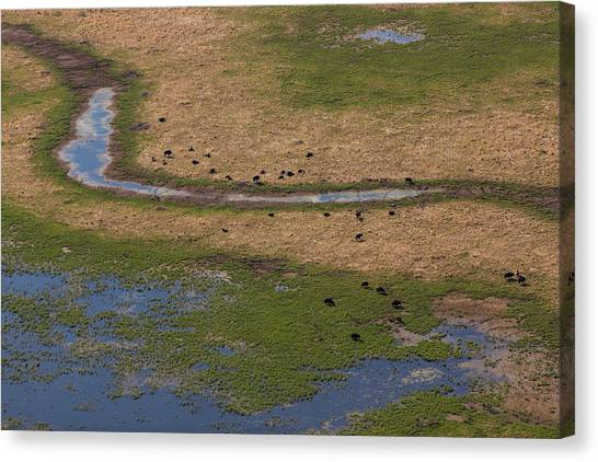 Northwest Territories Canvas Print - Images From Wood Buffalo National Park by Tom Lynn